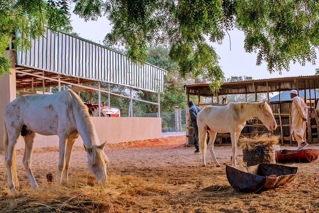 Buhari in farm