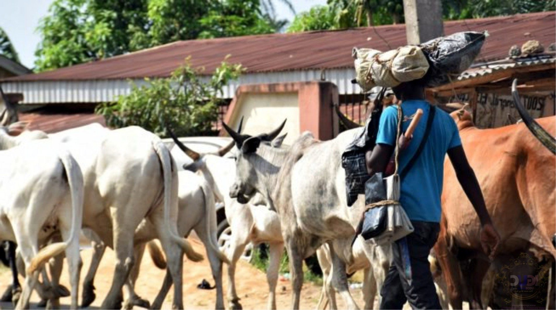 Eastern Security Network Invades Fulani Herdsmen Camp in Isiukwuato, Kill, burn dozens of Cows
