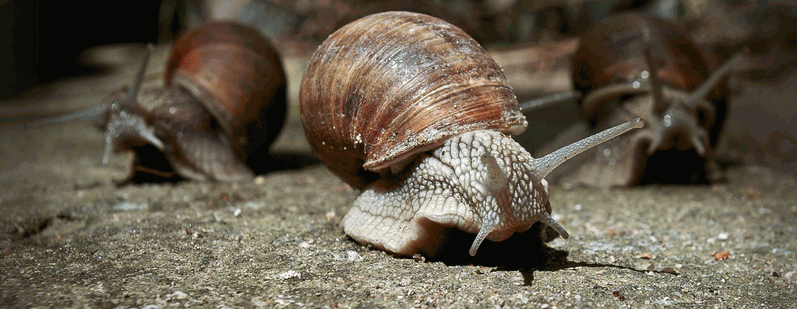 All you need to Know on How to Start a Snail Farm